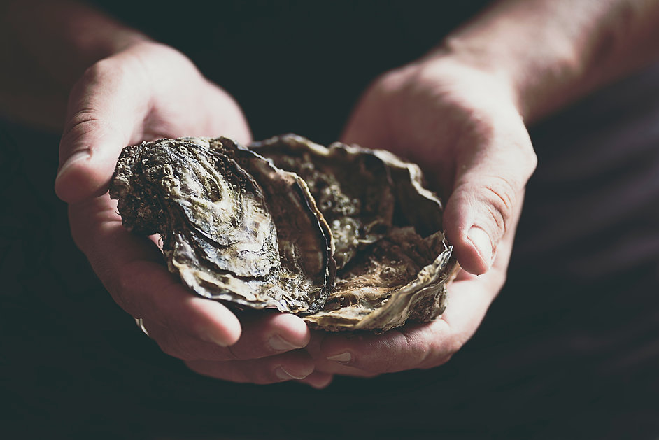 Fresh large oysters in male hands on a d