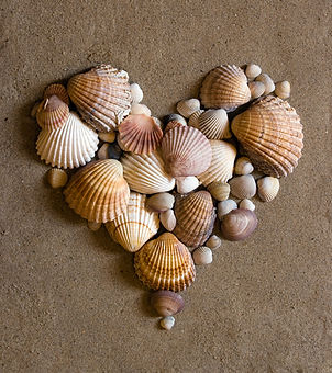 valentine heart made with shells.jpg