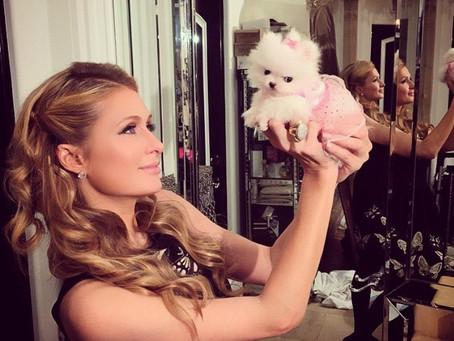 La Vida MEGA-LUJOSA de los Perritos de Paris Hilton