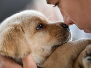 Que Es El Parvovirus Y Como Cuidar A Tu Mascota Del Mismo
