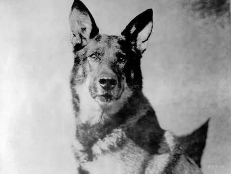 La Increíble Historia De Rin Tin Tin, El Perro Que Tocó Mil Corazones