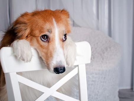 5 Cosas Que Debes Tener En Cuenta Antes De Comprar Un Cachorro