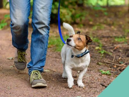 Consejos Para Pasear A Tu Perro Correctamente