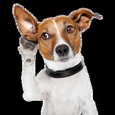 Dog-PNG-Image.png