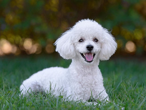 Las 5 MEJORES Razas de Perros para Dueños Principiantes
