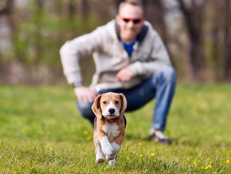 5 Problemas Que Todo Dueño de Mascota Tiene y Como Solucionarlos Para Siempre