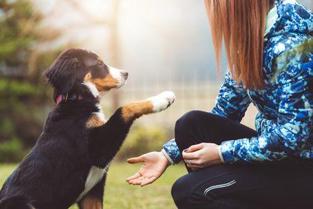 5 Productos Que Te Facilitaran El Entrenamiento De Tu Mascota