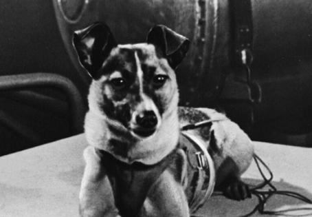La Historia de Laika, El Primer Perro en ir al Espacio