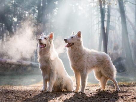 Los Lobos Detrás de la Serie de Televisión Más POPULAR del Mundo