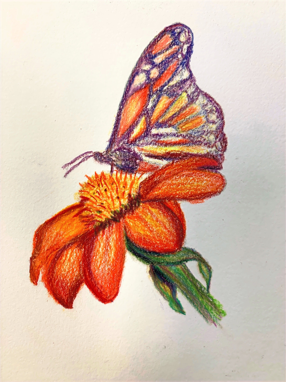 Colored%20Pencil%20Composition_edited