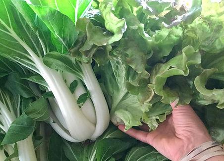 bok-n-lettuce.jpg