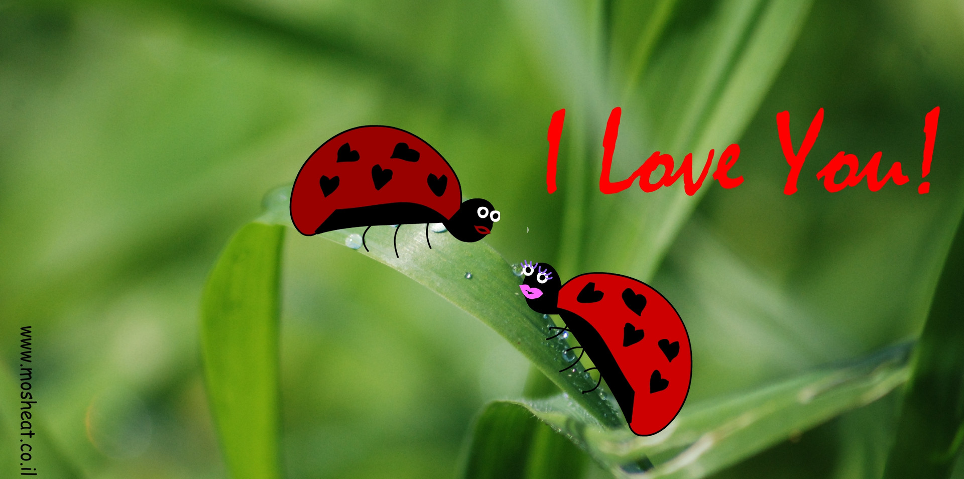 I LOVE YOU חיפושיות