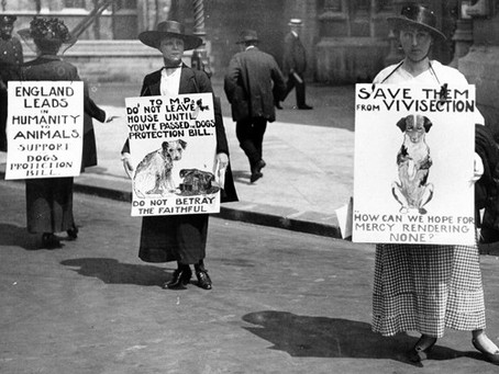 A long-standing aversion to Sentimentality in the Animal Rights Movement and its Historical Roots
