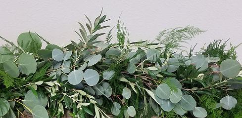 Eucalyptus-Olive-and-Plumosus-closeup_ed