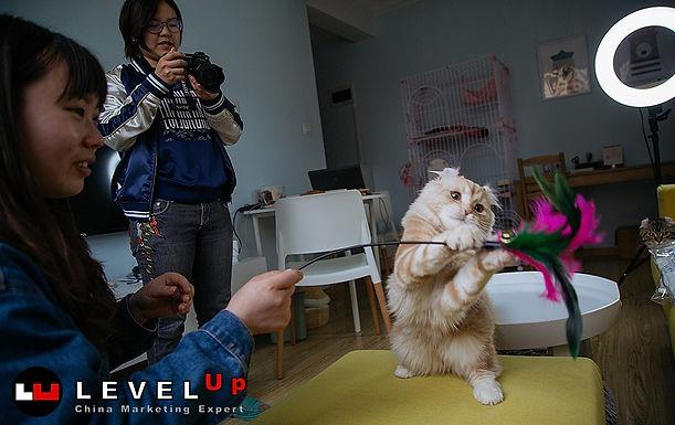 ทาสแมวจงเจริญ สาวจีนพลิกโอกาสทำธุรกิจ Start Up แบบแมวๆ