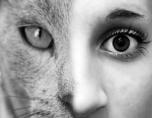 Zapomniany Kot - ujawnij swoją kobiecość