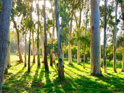 ביקור ביער האילנות