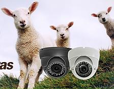 Lambing Cameras