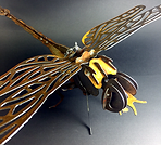 Dragonfly_YA.png