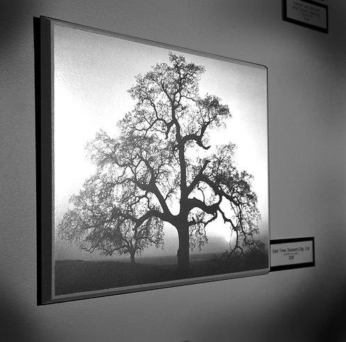 Ansel Adams, Oak Tree, Sunset City, CA