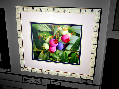 Blueberies, Framed & Matted Photograph