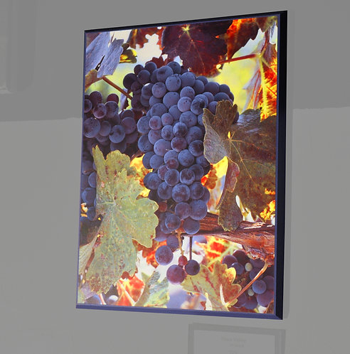 Napa Valley, Grapes