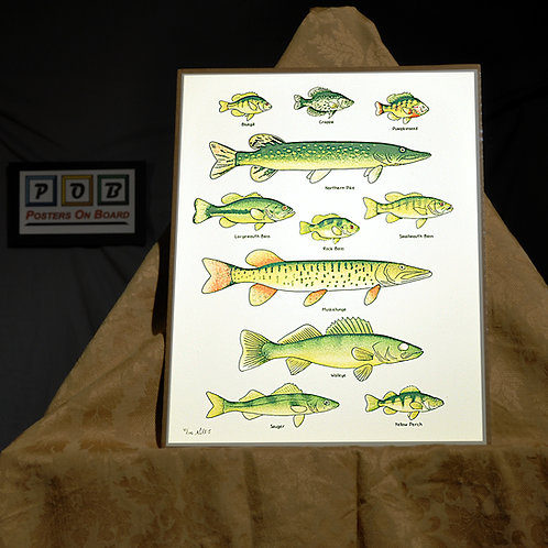 Brian Geihl, Fish Guide, 11x14, Limited Edition, 41-100, 25