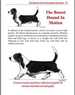 Basset in motion