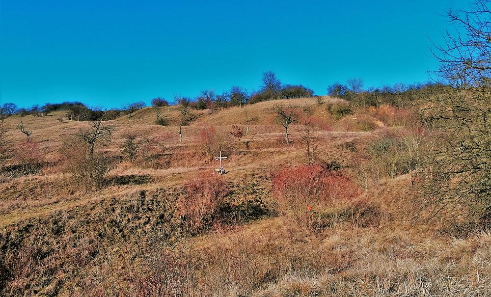 Přírodní památka Na Dlouhé stráni se vyznačuje výskytem řadou vzácných rostlin