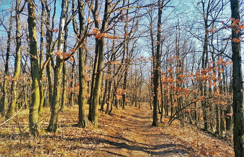 Cesta březnovou Přírodní rezervací Šance