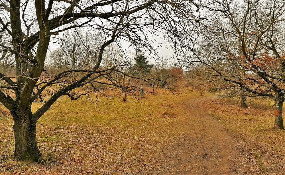 Přírodní památka V Hrobech byla původně pastvinou