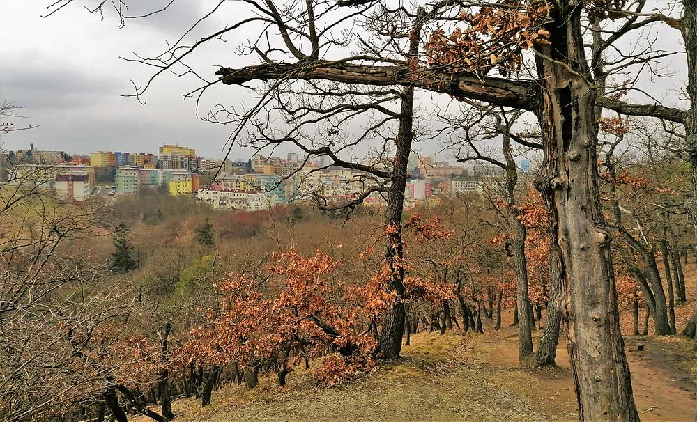Vyhlídkové místo Krčský les II nabízí pohled na pestrobarevnou výstavbu na jihu Prahy