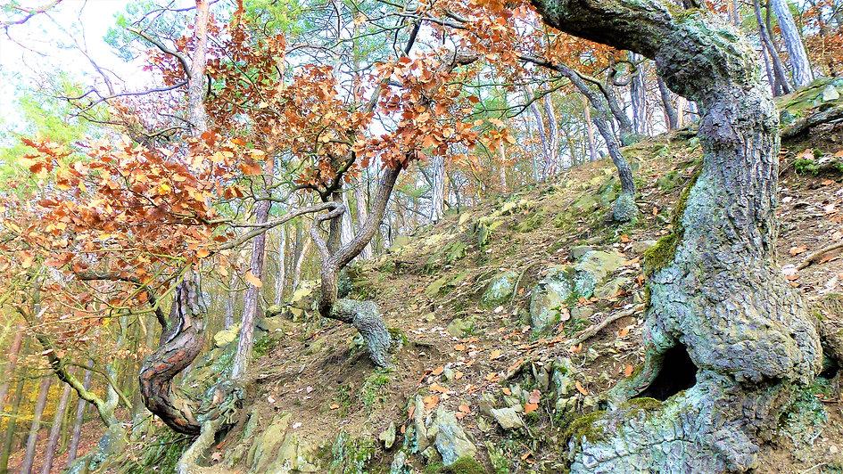 Stromy na Molochově skále (VP).JPG