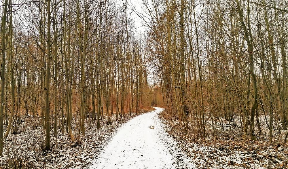Lokalita přírodní rezervace Pístecký les se na jaře změní v bílomodrou plochu, a to díky rozkvetlým plochám bledulí jarních či ladoněk vídeňských