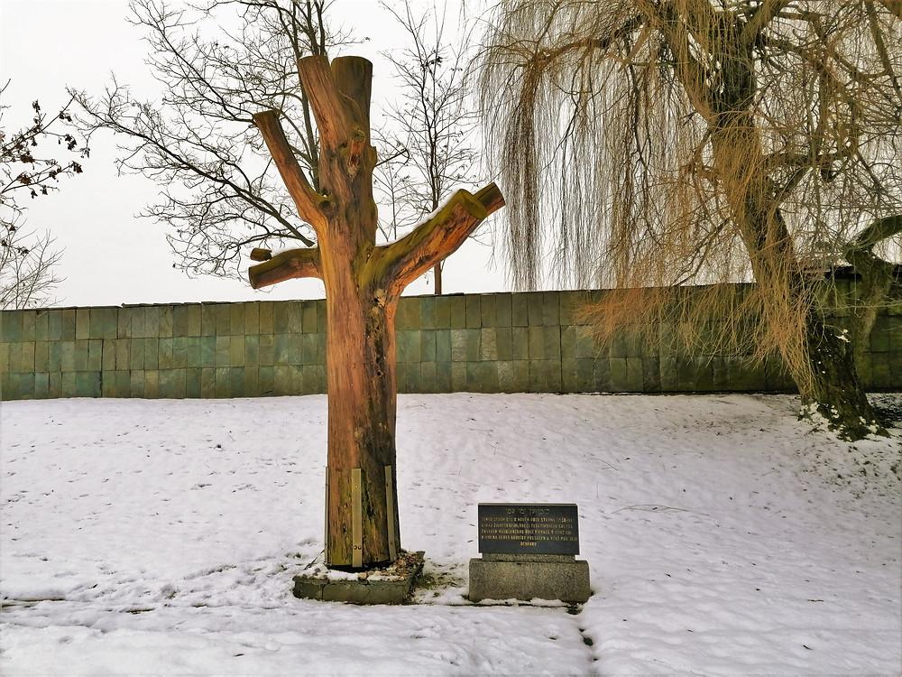 Torzo stromu, který byl zasazen organizací Mládež terezínského ghetta v roce 1948 k uctění obětí holocaustu