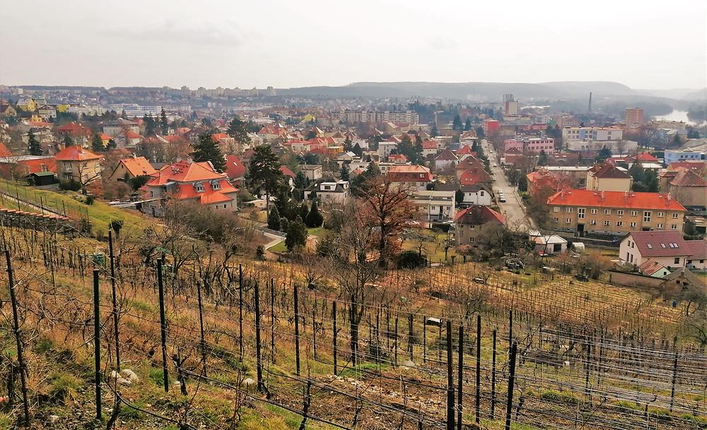 Arcibiskupská vinice je nejjižnější pražskou vinicí