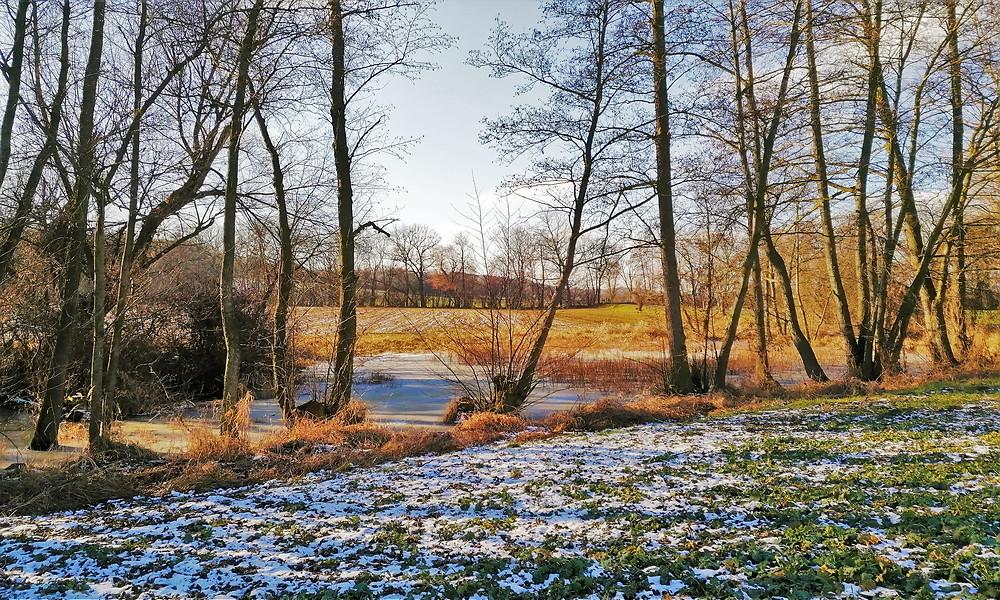 Na slatiniště v Přírodní památce Slatiniště u Vrbky se navázala řada vzácných mokřadních živočichů i rostlin