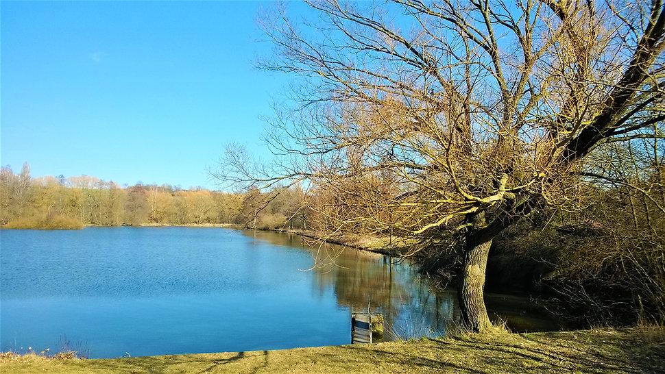 Blovický rybník.jpg