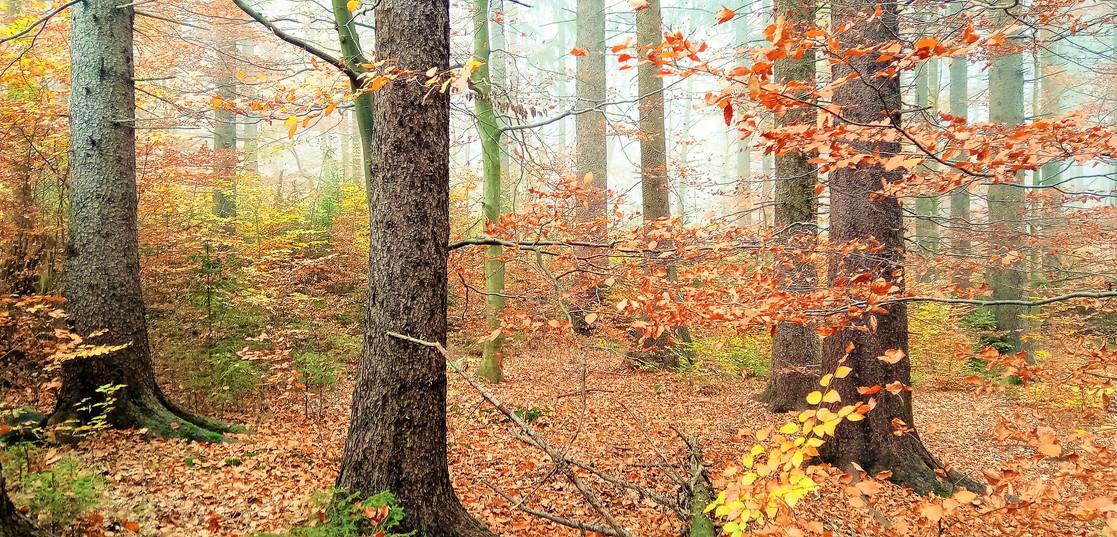 Galerie: Kolik barev má podzim u Kasejovic?