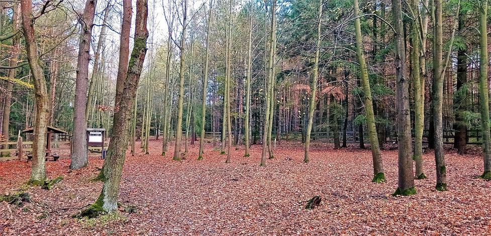 Arboretum Žďár.jpg