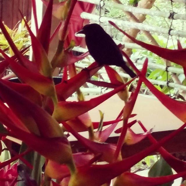 My little Bird