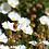 Thumbnail: La Fleur et le jardin, (toute) une histoire