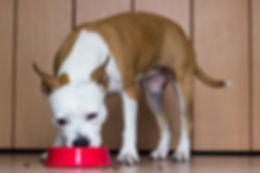 Dog-eating-food.jpg