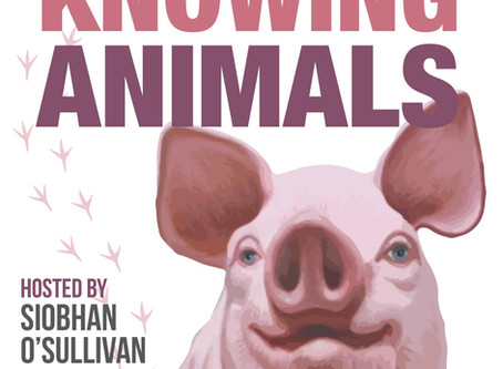 Interview with Knowing Animals podcast