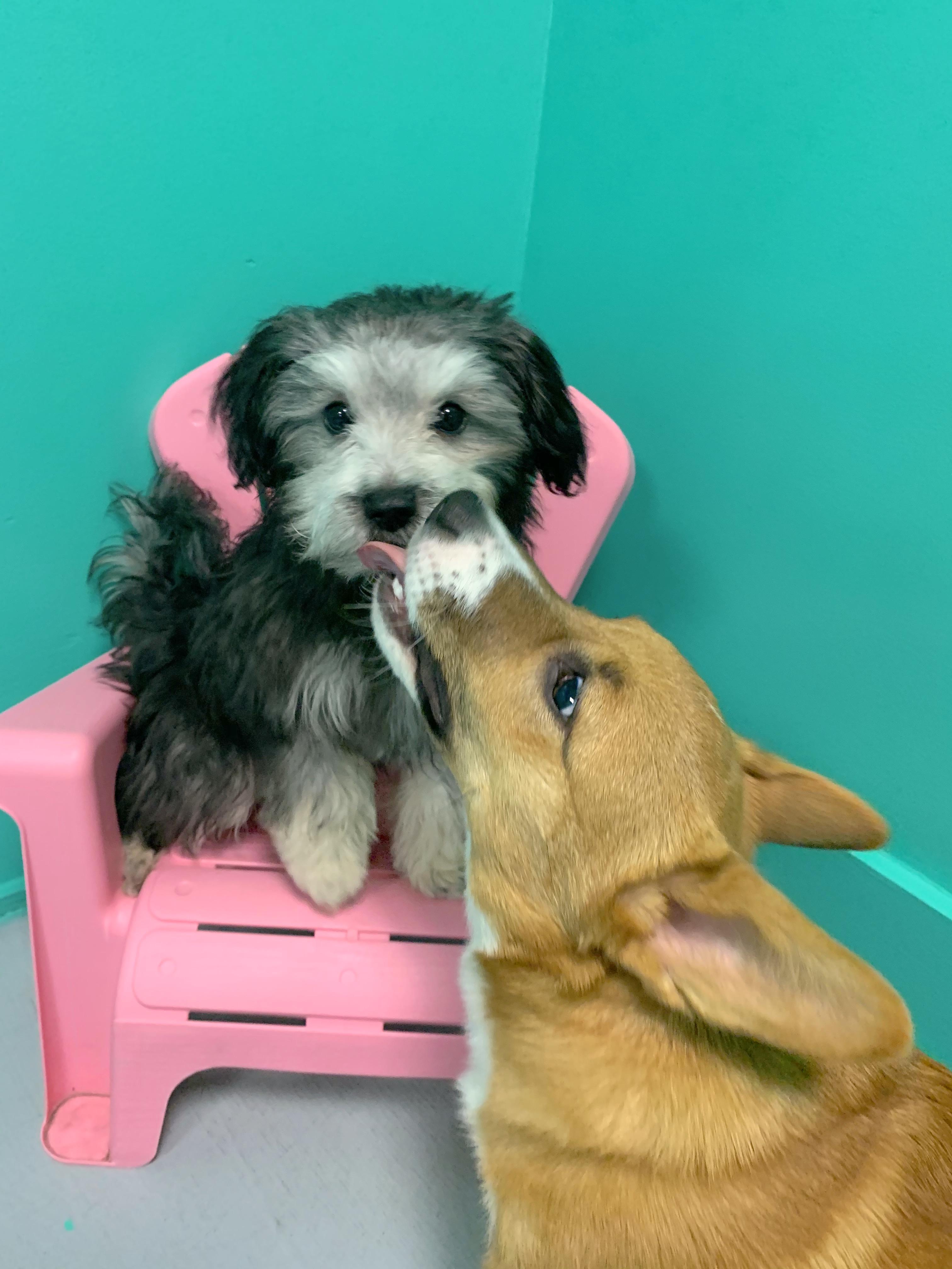 Fur-ever Friends!