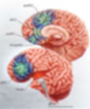 Brain centers related to depression