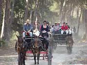 carruajes doñana coches de caballo