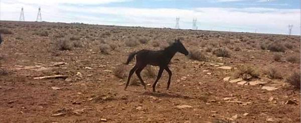 Foal trotting.jpg