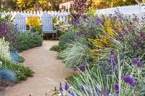 Garden Design, Pollinators, and Companion Planting