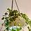 Thumbnail: Vintage Flycatcher Glass Light  Shade